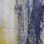 外壁塗装のプロが教える|外壁のカビ・コケの防止方法と落とし方