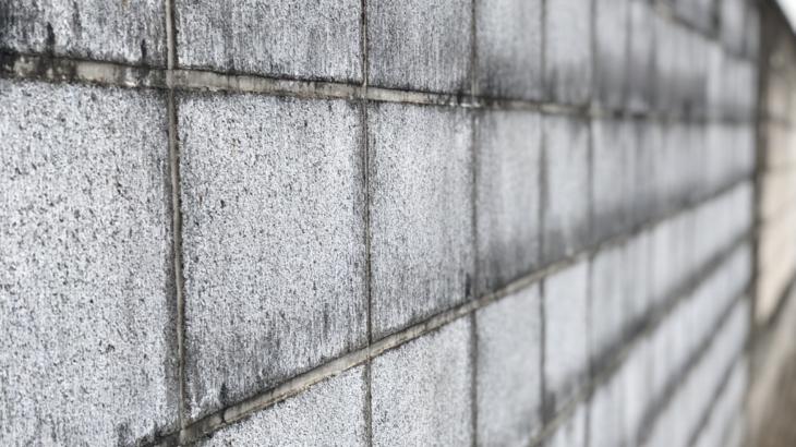 【外壁のプロが徹底解説】外壁のコケを綺麗に落とす方法・コケを予防する方法
